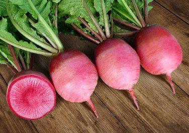 Овощ дайкон фото