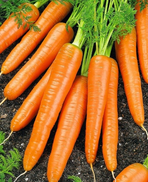 Фото овоща морковь