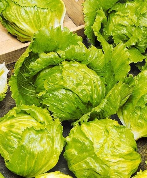 Кочанный салат фото