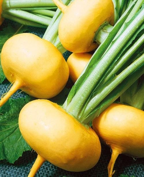 Репа фото овощ